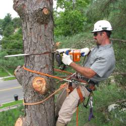 Tree Removal