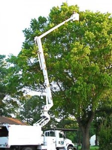 Tree Pruning in Virginia Beach, Norfolk, Chesapeake, Suffolk