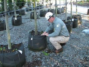 Tree Planting for Success
